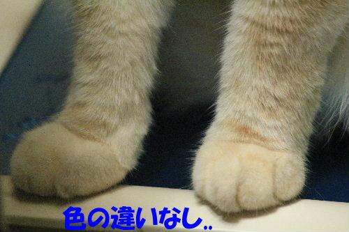 2011年8月あし4.JPG