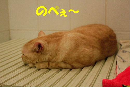 2011年8月お風呂0.JPG