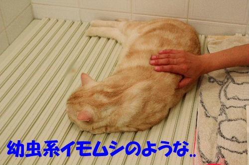 2011年8月お風呂1.JPG