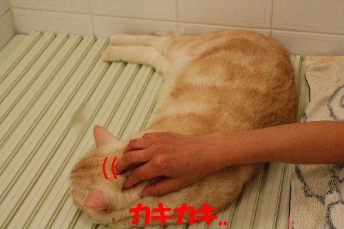 2011年8月お風呂2.JPG