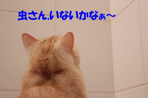 2011年8月お風呂7.JPG