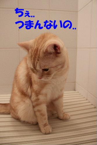 2011年8月お風呂8.JPG