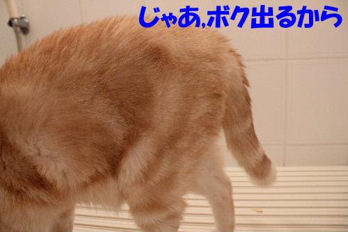 2011年8月お風呂9.JPG