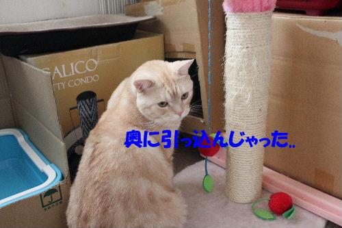 2011年8月つめ3.JPG