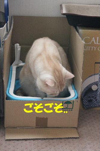 2011年8月つめ6.JPG