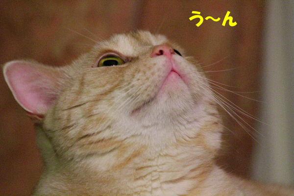 2011年8月ひげ5.JPG
