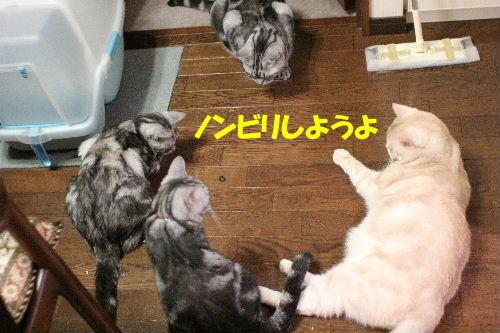 2011年8月カナ4.JPG