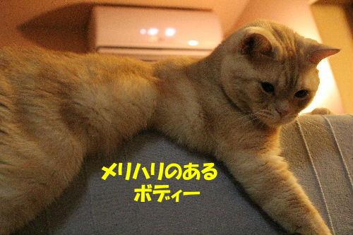 2011年8月ボ2.JPG