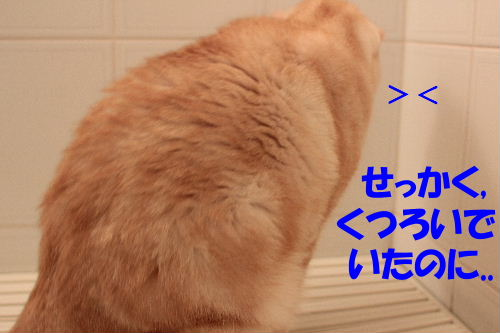 2011年8月リベ2.JPG