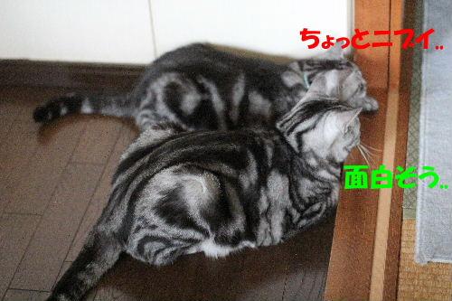 2011年8月涼3.JPG