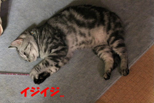 2011年8月負傷3.JPG