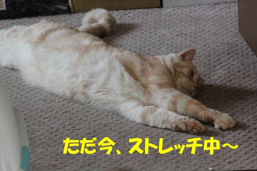 2011年9月ごろ2-6.JPG