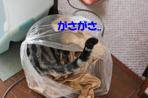 2011年9月ごろ3-2.JPG