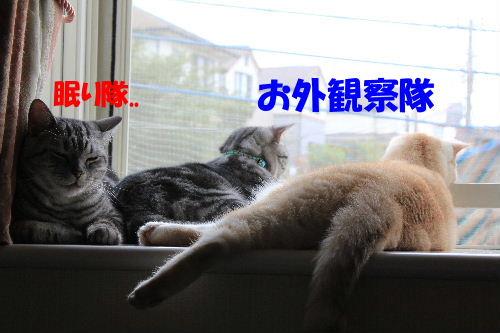 2011年9月アキ4.JPG