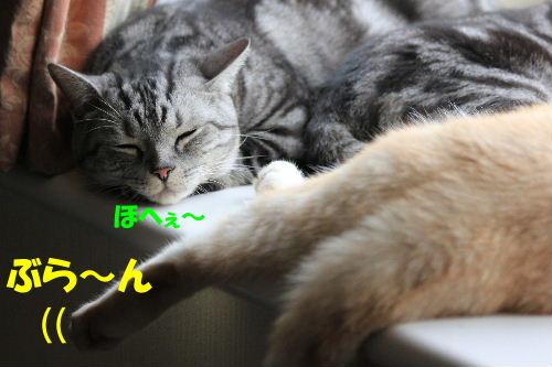 2011年9月アキ4-3.JPG