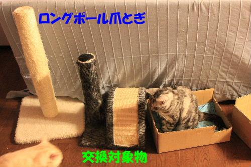 2011年9月プレ3.JPG