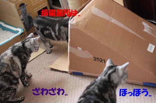 2011年9月転落4-4.JPG