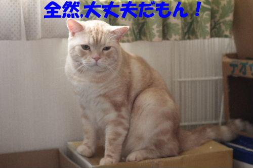 2011年9月転落6.JPG