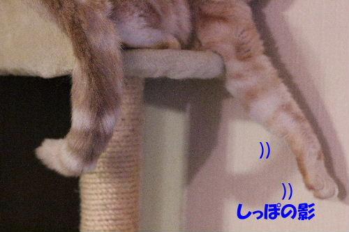 2012年1月ショート4-2.JPG