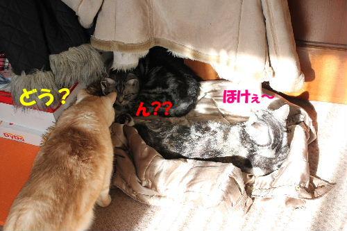 2012年1月光3-2.JPG