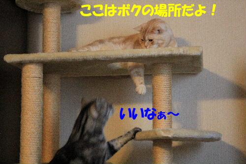 2012年1月大将2.JPG