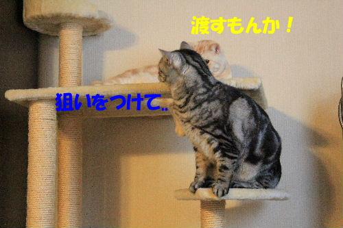 2012年1月大将2-2.JPG