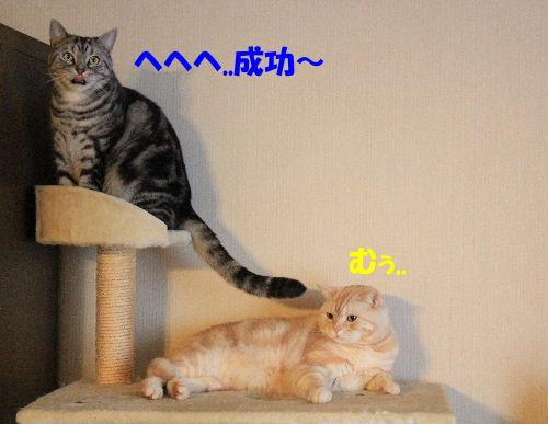 2012年1月大将2-3.JPG