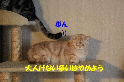2012年1月大将2-4.JPG