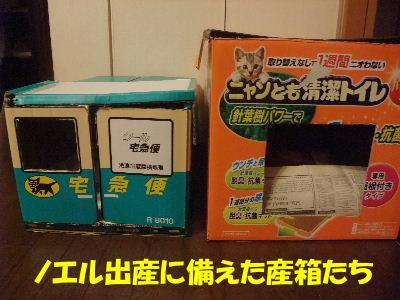 2012年1月黒猫2.JPG