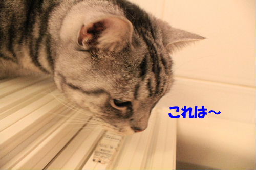 2012年2月うる3-2.JPG