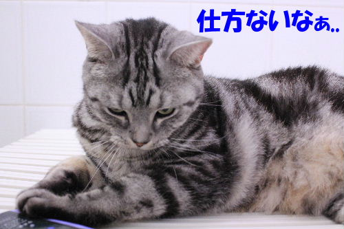 2012年2月うる4-2.JPG