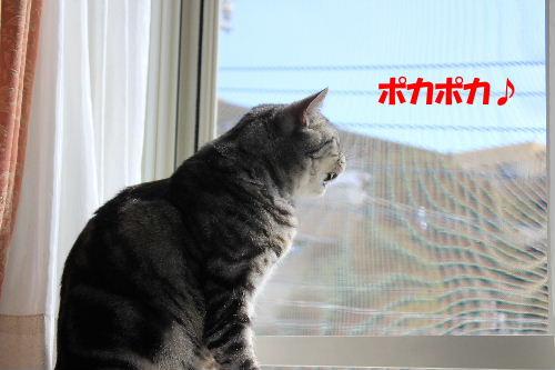 2012年2月予感2.JPG