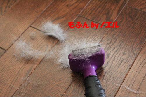 2012年2月予感4.JPG