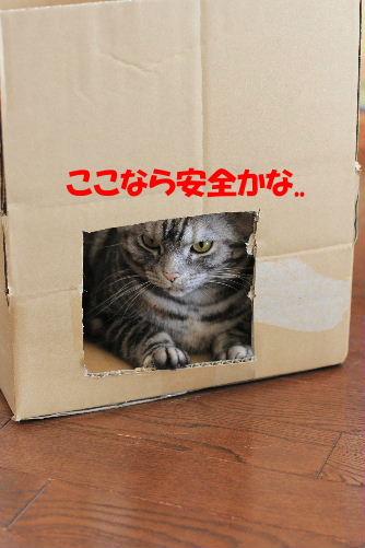 2012年2月箱箱2-3.JPG