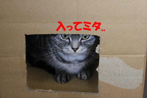 2012年2月箱箱3.JPG
