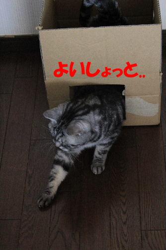 2012年2月箱箱3-4.JPG
