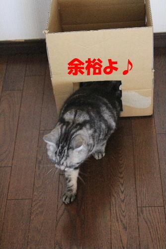 2012年2月箱箱3-5.JPG