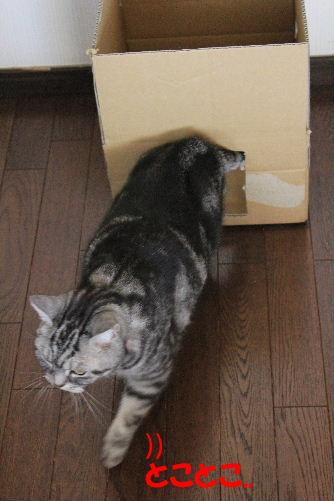 2012年2月箱箱3-7.JPG