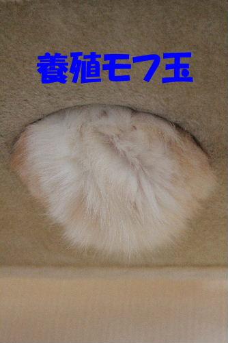 2012年2月養殖2-2.JPG