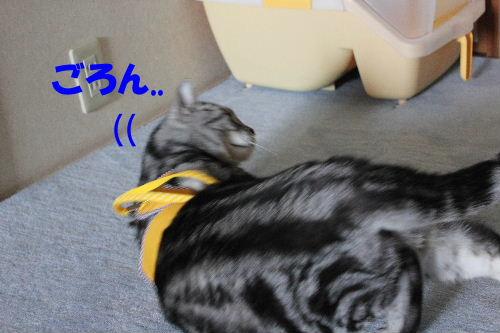 2012年4月ハーネス3-3.JPG