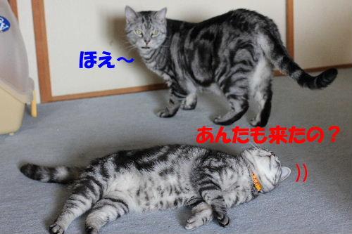 2012年4月初日3-2.JPG