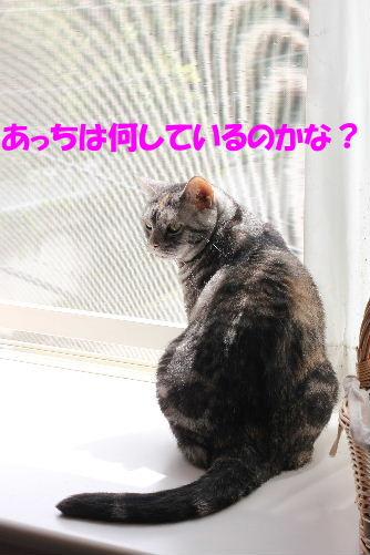2012年4月初日3-3.JPG