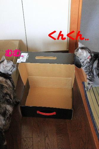 2012年4月箱2-4.JPG