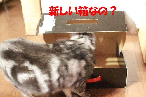 2012年4月箱4-2.JPG