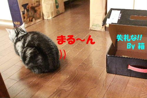 2012年4月箱4-6.JPG