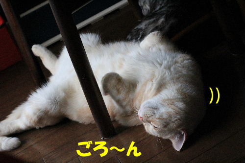 IMG_0022.JPG