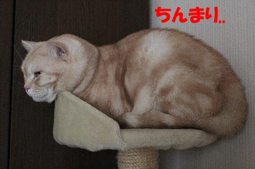 IMG_4885.JPG