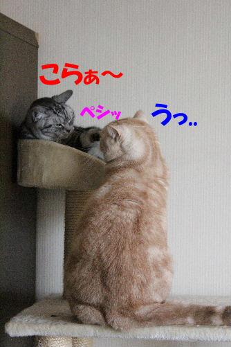 IMG_5039.JPG