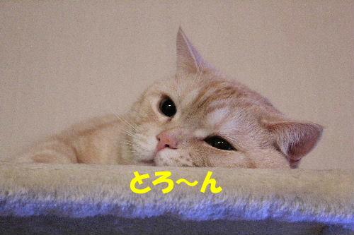 IMG_5060.JPG