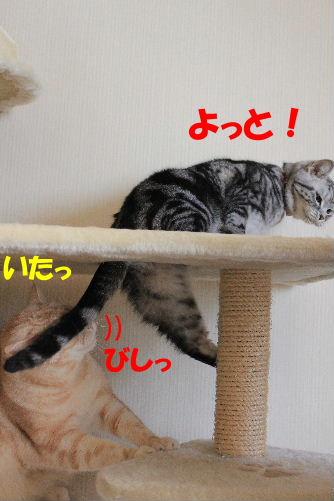 IMG_8307.JPG